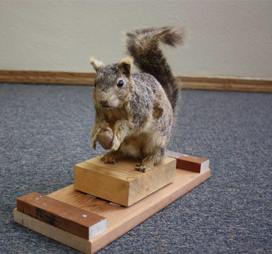 AmosPeters Taxidermy Squirrel